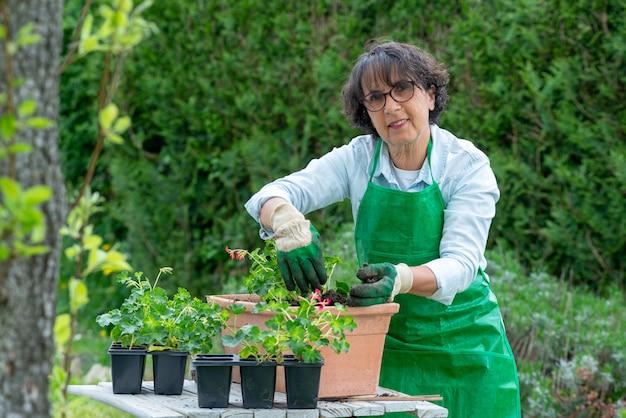 Woman potting geranium flowers