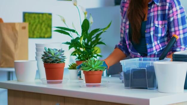 台所のテーブルに座って家の園芸のための花を準備する女性。シャベルで肥沃な土壌をポットに使用し、白いセラミック植木鉢と家の装飾のために植え替えるために準備された植物。