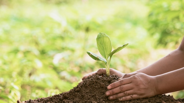 Woman protecting young green seedling in soil against blurred background