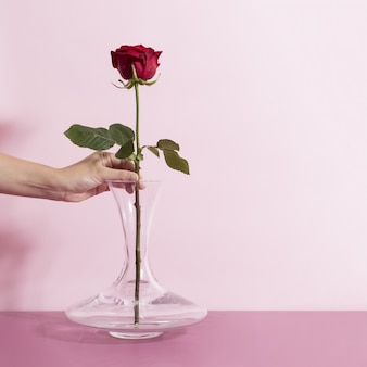Woman putting a beautiful single rose in a wide bottom glass vase