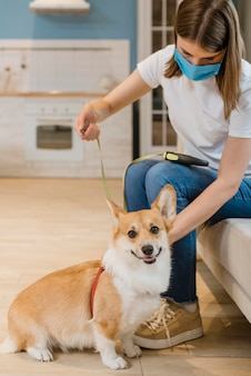 Woman putting leash and harness on dog