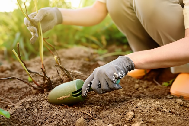 Woman replanting plant in home garden.