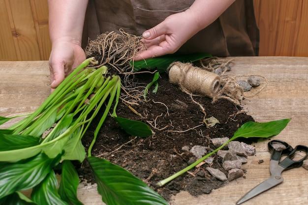 Женщина пересаживает растение в новый горшок у себя дома перемещение домашнего цветка весенний деревенский фон