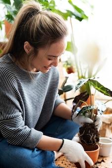 집 안에 관엽식물을 화분에 심는 여성