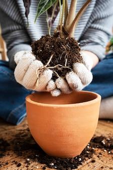 Donna che rinvasa una pianta d'appartamento all'interno della sua casa