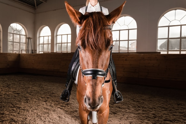 Женщина верхом на породистой лошади. Premium Фотографии