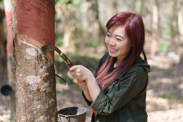 Woman rubber farmer slitting rubber tree for keep latex, thailand.