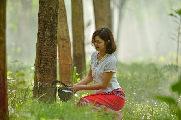 Woman rubber tapping in rubber tree row agricultural, thailand
