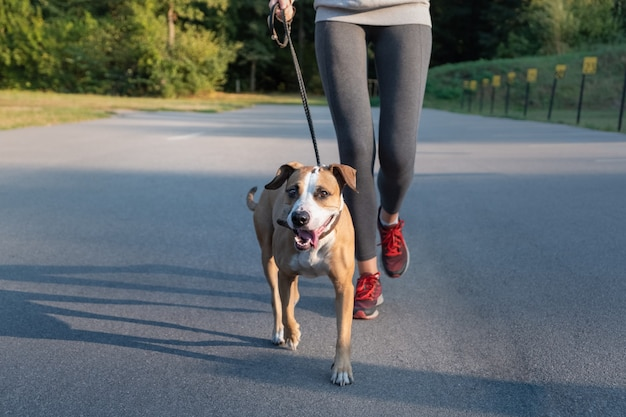 Woman in running suit jogging with her dog. young fit female and staffordshire terrier dog doing morning walk in a park