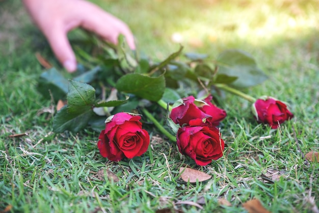 A woman's hand grabbing red roses flower on green grass field background