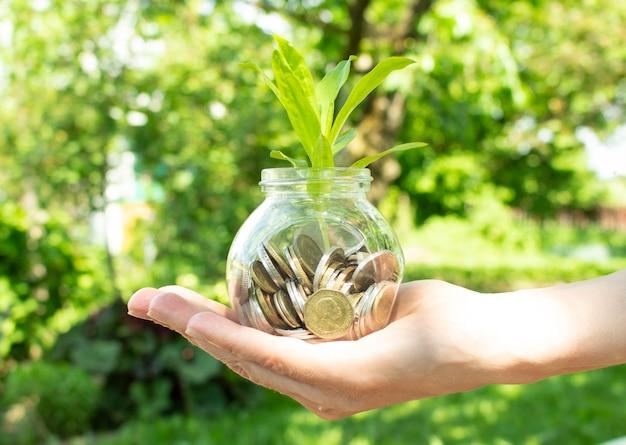 Женская рука держит растение, растущее из монет в стеклянной банке на размытом зеленом естественном фоне с эффектом солнечного света.