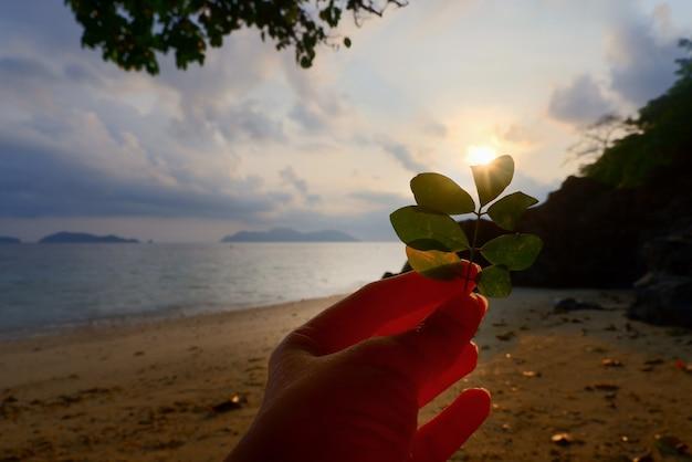 緑の葉を持っている女性の手は太陽を覆い隠します。タイの白い砂浜で