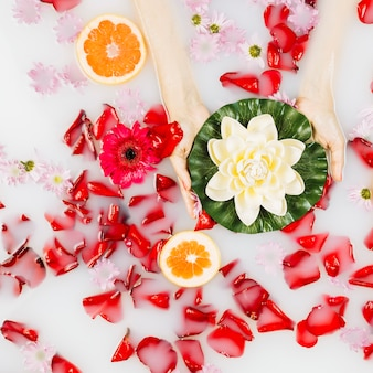 Woman's hand holding lotus with petals and grapefruit slices floating on milk