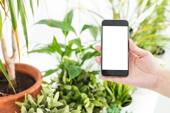 Woman's hand holding mobile phone near potted plants