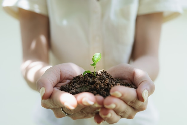 Woman's hand holding sprout plant, seedling plant in ground. saving earth and planting tree