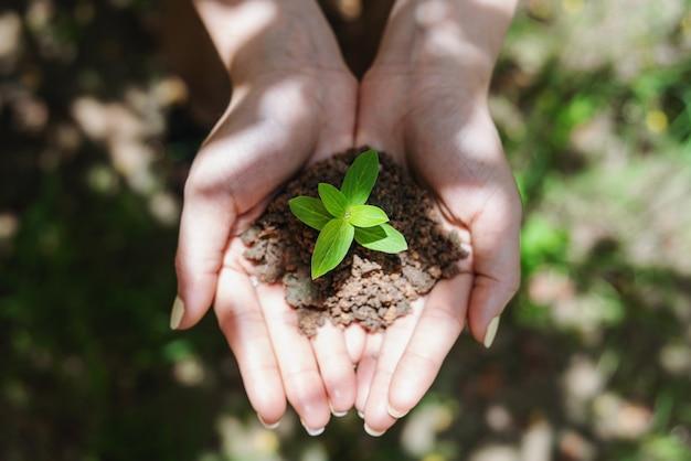 芽植物、地面に苗植物を持っている女性の手。上面図。