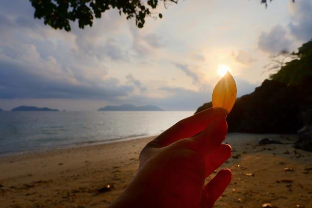 黄色の葉を持っている女性の手は太陽を覆い隠します。タイの白い砂浜で