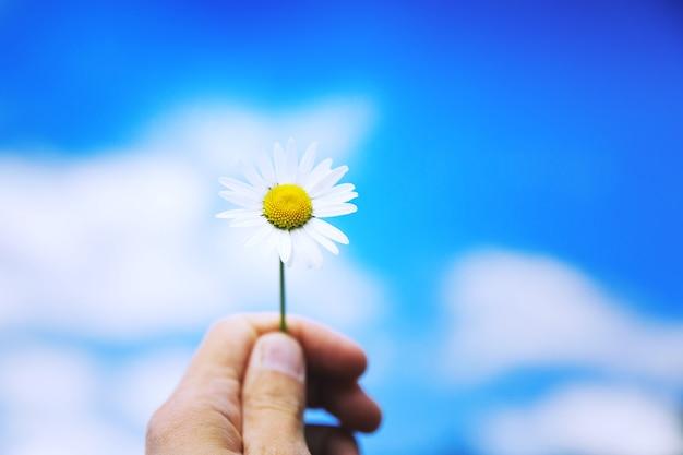 Женская рука держит белую ромашку на фоне голубого неба