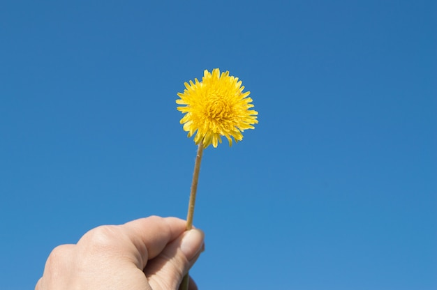 Woman's hand holds a yellow dandelion against the sky