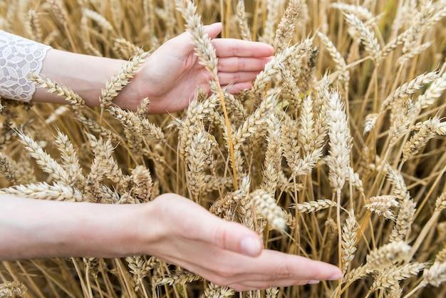 女性の手は畑の小麦の耳に触れます。収穫の概念