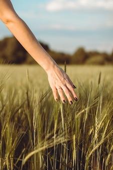 女性の手は日没や日の出で若い小麦の耳に触れます。田舎と自然の風景。 1