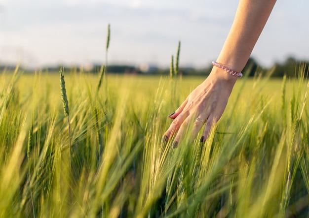 女性の手は日没や日の出で若い小麦の耳に触れます。田舎と自然の風景。 3