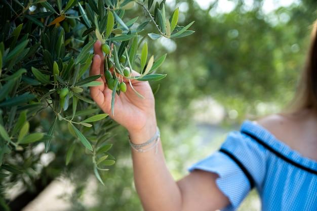 Рука женщины касаясь ветки оливкового дерева. оливки цветут на дереве.
