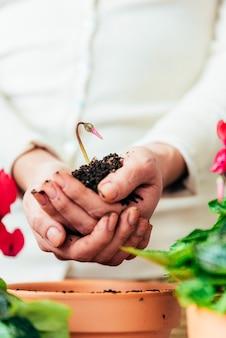 새 냄비에 식물을 이식하는 여자의 손.