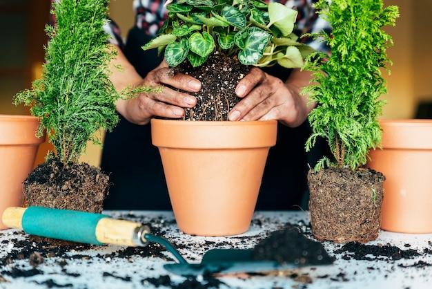Руки женщины пересаживают растение в новый горшок.