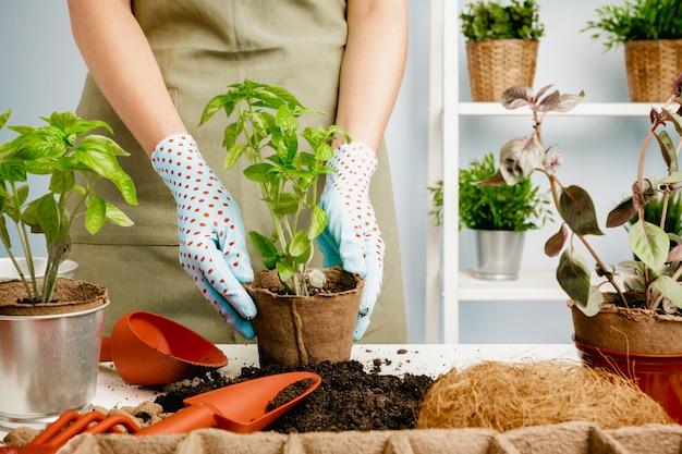 Woman's hands transplanting plant a into a new pot