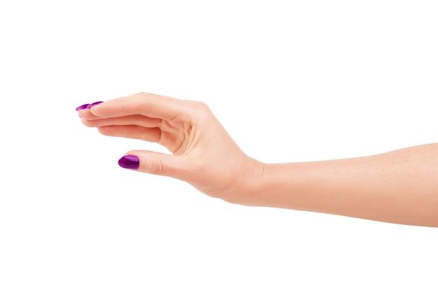 깔끔한 매니큐어와 여자의 손입니다. 흰색 배경에 고립.