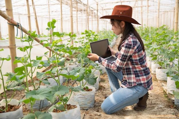 Assistente scientifico donna, funzionario agricolo. nel melone di ricerca in serra