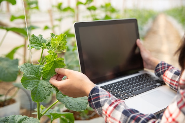 Woman science assistant, agricultural officer. in greenhouse farm research melon