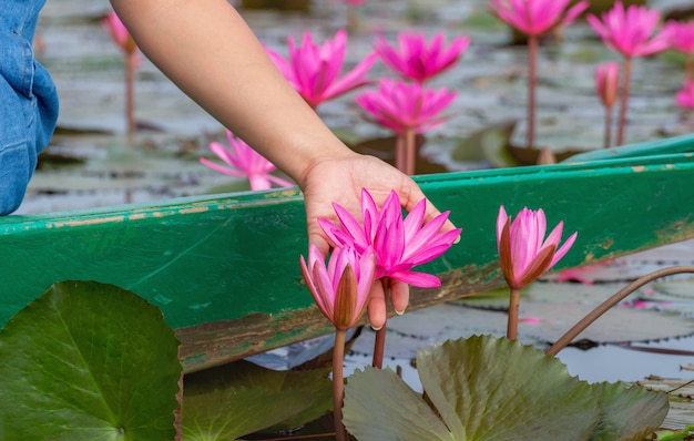 Woman sitting on the boat were picked lotus