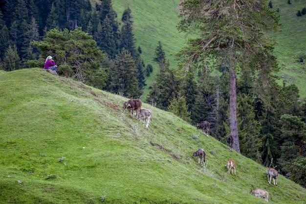 昼間の放牧牛に囲まれた緑に覆われた丘の上に座っている女性