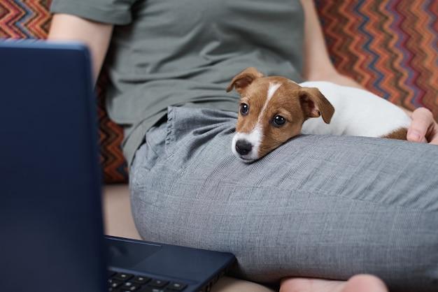 彼女の子犬のジャックラッセルテリア犬とラップトップコンピューターで働くソファーに座っている女性。自宅からの遠隔作業