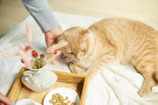 Женщина сидит на кровати и пьет кофе, кормление кошки в утреннем солнечном свете, завтрак в постели. самка с домашним животным,