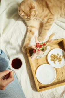 여자는 침대에 앉아 커피를 마시고, 아침 햇살에 고양이에게 먹이를 주고, 침대에서 아침을 먹습니다. 애완 동물을 키우는 여성