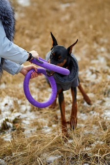 女性は屋外で美しい犬のドーベルマンと時間を過ごす