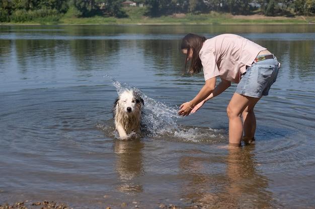 Всплеск женщины, игра с сумасшедшей влажной австралийской овчаркой блю-мерль в реке, лето. развлекайтесь с домашними животными на пляже. путешествуйте с домашними животными.