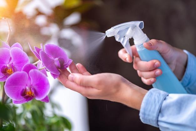 女性は植木鉢に植物をスプレーします。