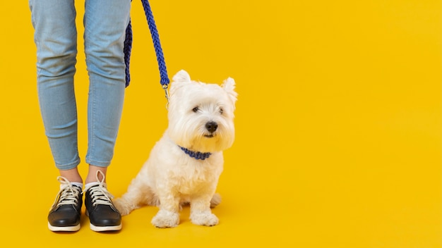 愛らしい犬の隣に立つ女性