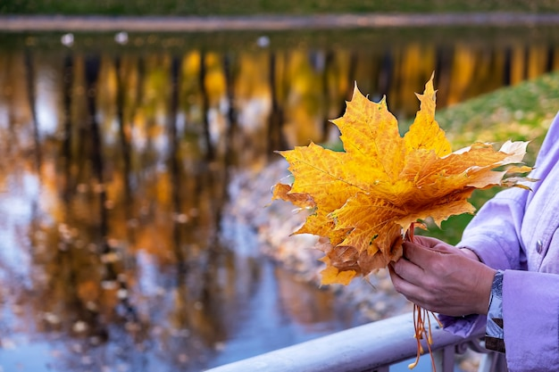 女性は橋の上の公園に立って、秋のカエデの葉の花束を持っています。体の一部。秋のロマンチックなコンセプト。湖の背景。セレクティブフォーカス。