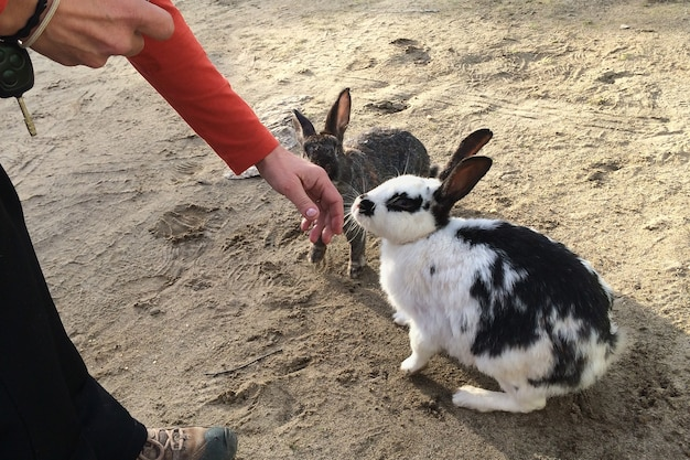 Woman stroking a rabbit. nature love and vegan concept