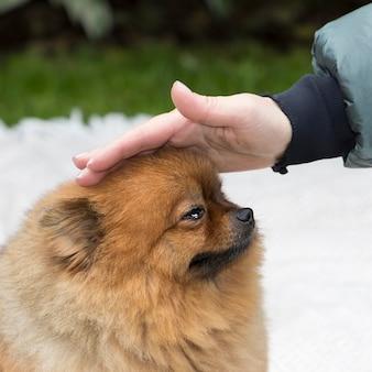 泣いている犬の頭を撫でる女性