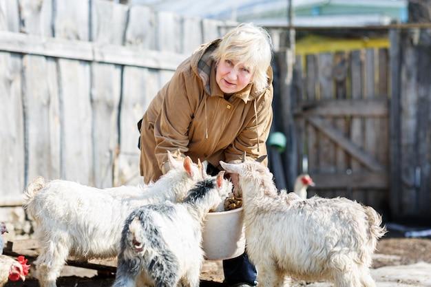 女性は農場の小さなヤギの世話をします