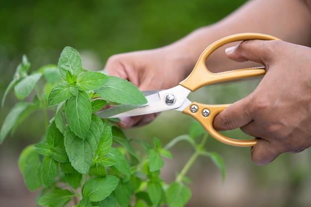 돌보고 식물을 키우는 여성, 가정 정원 개념, 장식용 가지 치기