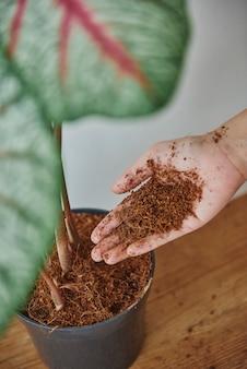 Donna che si prende cura della sua piccola pianta
