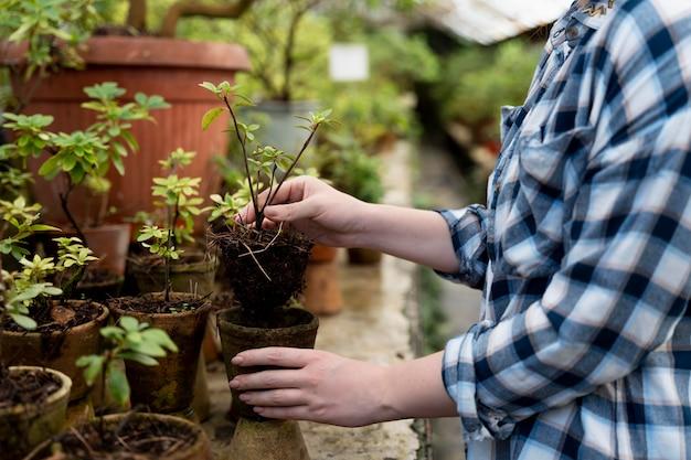 植物の世話をしている女性