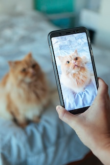 Woman taking a picture of her cat at home